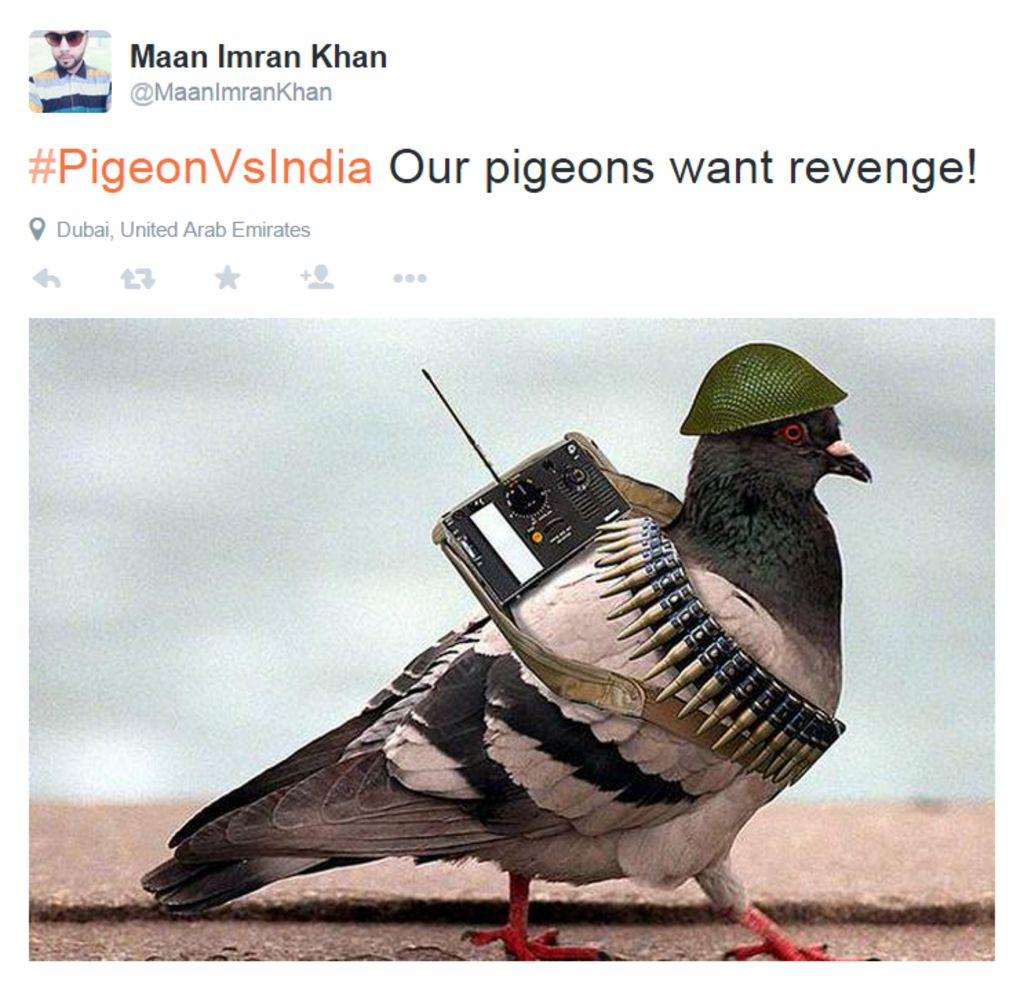 Pigeon caught Funny and Weird News